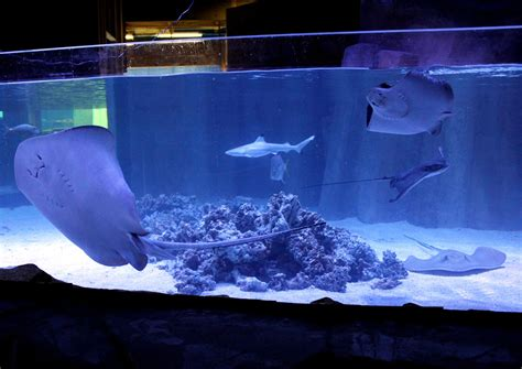Small Saltwater Sharks For Home Aquariums Shark Tank Quotes Quotesgram