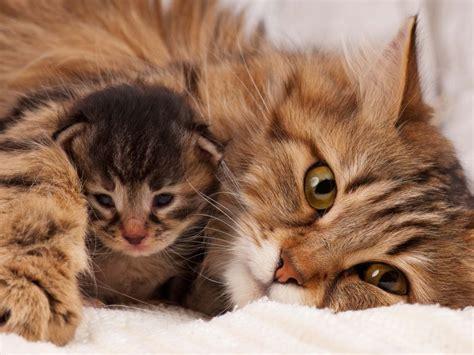 wann werden katzen rollig wenn katzenbabys zu fr 252 h abgegeben werden probleme