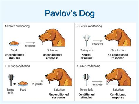 pavlovs dogs exploring theories of learning behaviourism ppt
