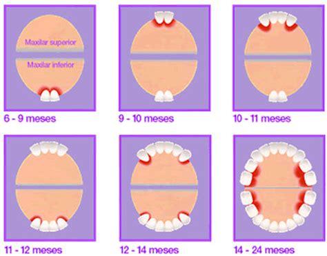 cuando le salen los dientes a los bebes 191 cu 225 ndo salen los primeros dientes de leche caballero