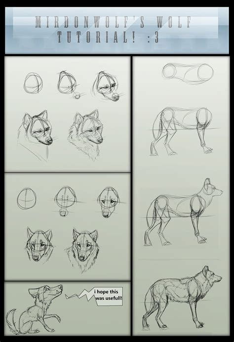 werewolf head tutorial mirdonwolf s basic wolf tutorial by foxbat sullavin on