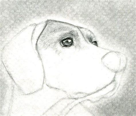 imagenes a la lapiz 1000 ideas sobre como dibujar un perro en pinterest