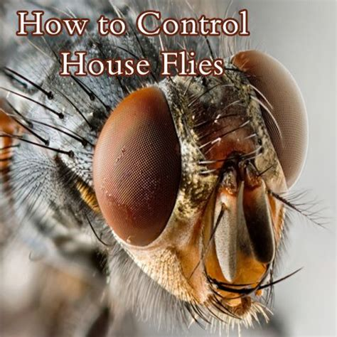 17 best ideas about fly remedies on