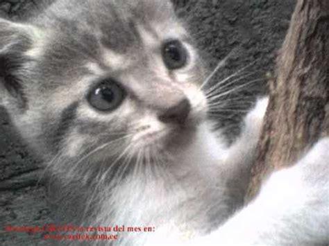 gatitos traviesos gatos traviesos