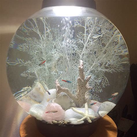 the 25 best ideas about biorb fish tank on 1