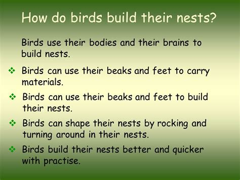 birds nests marvels of architecture and design ppt