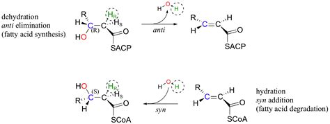 hydration vs dehydration reaction section 14 1 michael additions β eliminations and