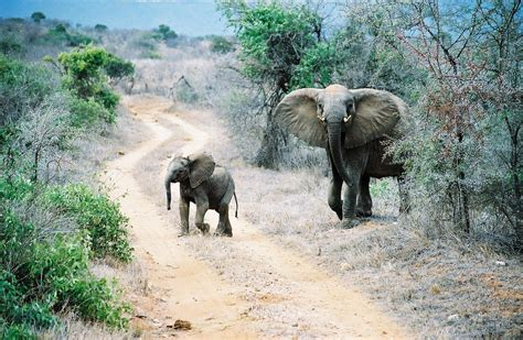 In Kenya 10 most beautiful and interesting places to visit in kenya