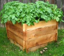 how to build a potato crate out of pallets pallet