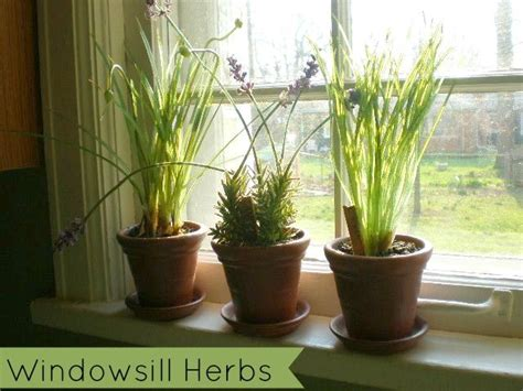 Windowsill Herbs How To Plant Your Own Windowsill Herb Garden And Save Money