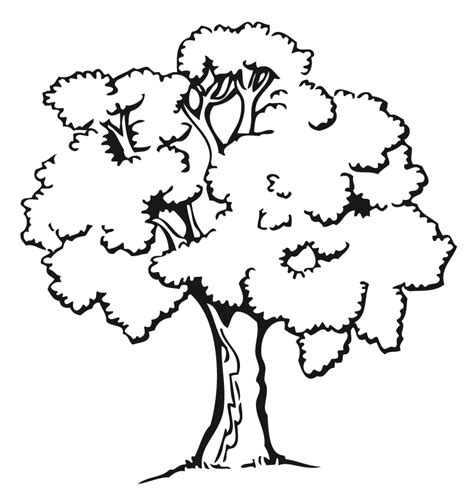 free coloring pages of arbol frondoso