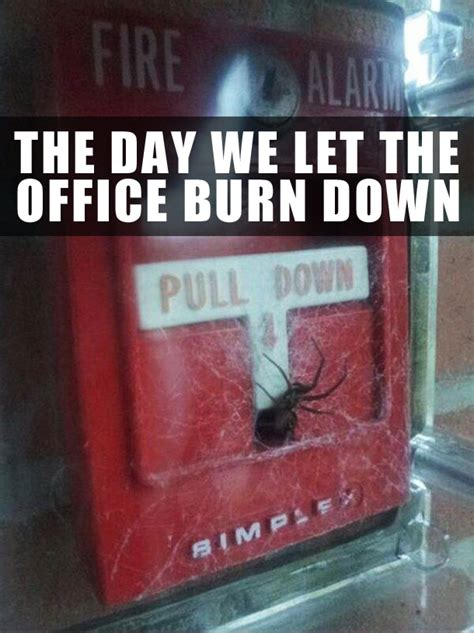 Spider Fire Alarm Meme - team jimmy joe 23 random funny pics to weird up your day