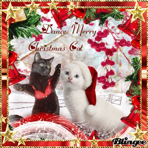 images of merry christmas kittens dance merry christmas cat picture 127105069 blingee com