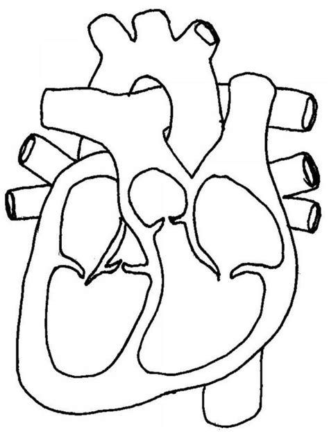 heart diagram drawing  getdrawingscom   personal  heart diagram drawing