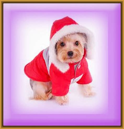ver fotos para navidad las mejores fotos de perritos en navidad imagenes de cachorros