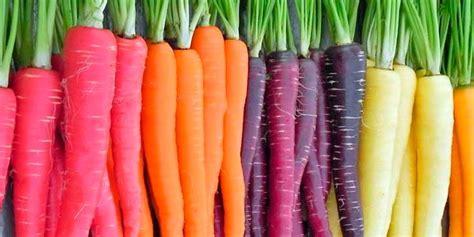 google imagenes de zanahorias las principales variedades e h 237 bridos cultivados de