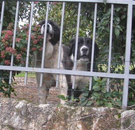 giardini per cani giardino per cani great giardini con erba sintetica