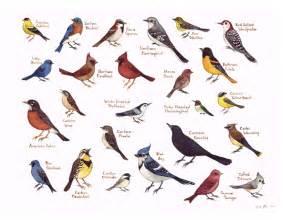 field guide painting birds of eastern carolina