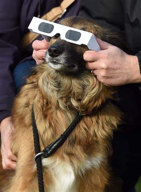 solar eclipse and dogs ring thrills skygazers as solar eclipse sweeps across atlantic photo gallery