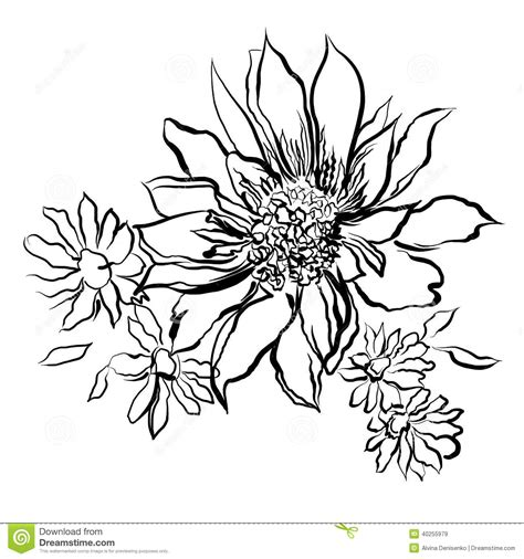 coloring book for watercolor flowers painted black outline on the white background