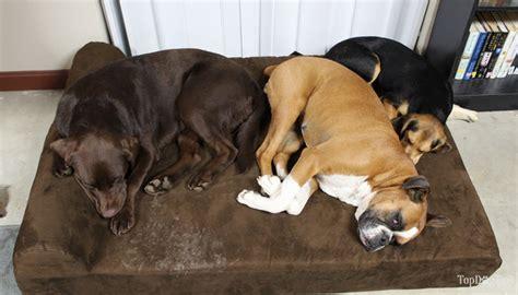 huge dog bed big barker dog bed review 2017 video best dog beds for big dogs