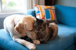 introducing cats and dogs how to introduce your new to your resident cats