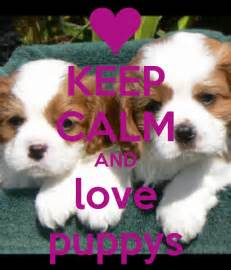 Keep calm and love puppys poster bbm lover keep calm o matic