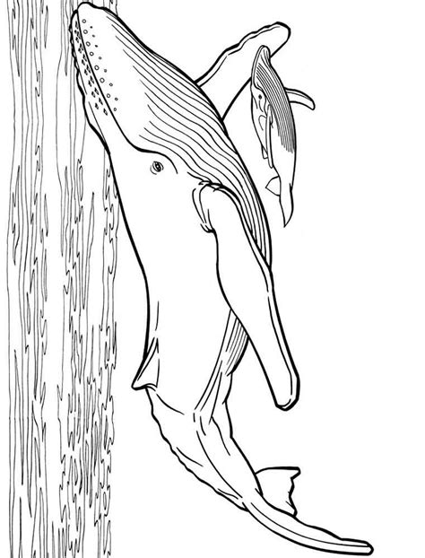 humongous whale coloring page whales coloring pages download and print whales coloring