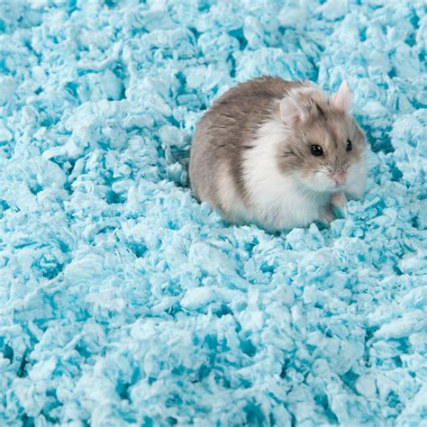 hamster beds hamster bedroom 28 images hamster and bedding flickr
