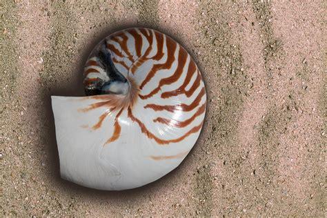 Fosil Kerang Laut gambar hewan makro biologi liburan ingatan bahan