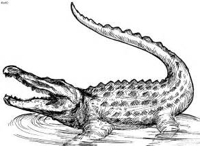 crocodile coloring pages pin by mari lyn prados on portal