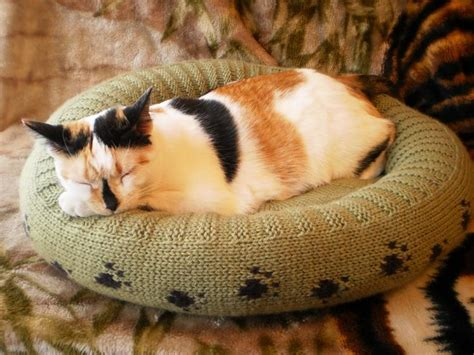 5 Pet Knitting Patterns For Friends