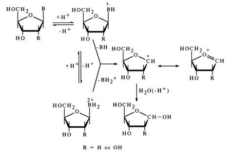carbohydrates bonds stability of n glycosidic bonds