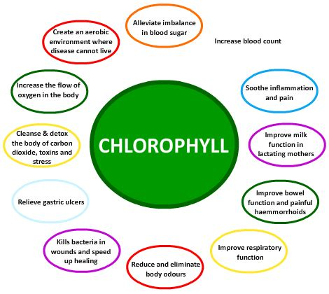 what color is chlorophyll chlorophyll