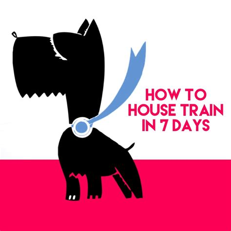 how to potty your in 7 days potty your in 7 days or less doggies