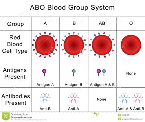 Blood Lecture At Ivy Tech Community College Studyblue Blood Type Pictures