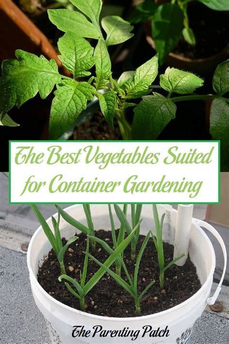 the best vegetables suited for container gardening