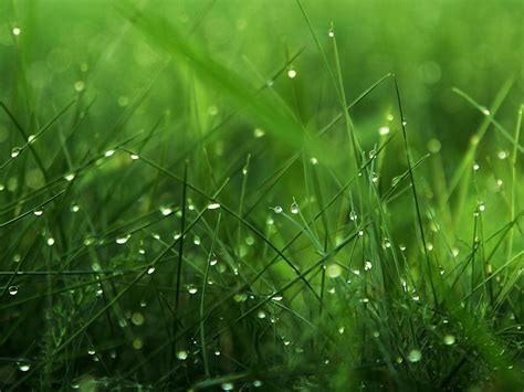 imagenes para pc naturaleza windows 7 naturaleza 9 hd fondos de pantalla gratis