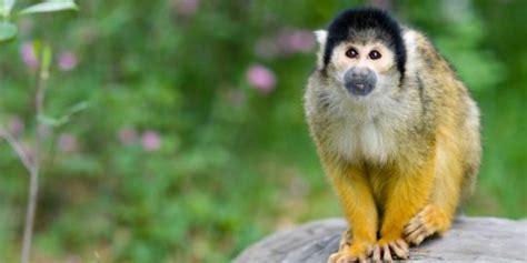 5 binatang paling tua yang ada di dunia jendela dunia