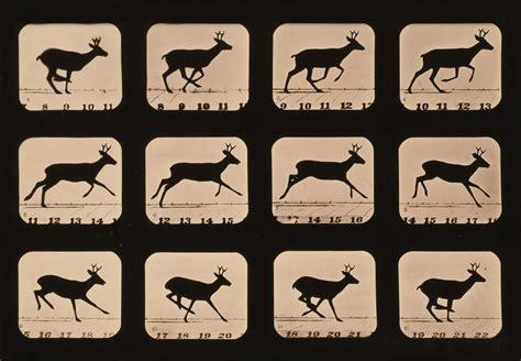 imagenes en movimiento para zootropo blog de soraya