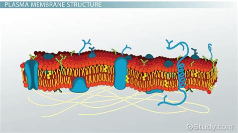 biology lab cell structure  function