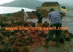 Faktor Yang Mempengaruhi Minyak Kelapa Sawit sekilas rangkuman proses pengolahan pabrik kelapa sawit