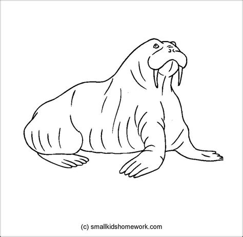 Animal Outlines Az Coloring Pages Animal Outlines For Colouring