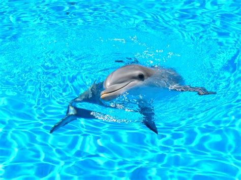 secrets the dolphin smile 25 amazing things dolphins do books dolphin doing tricks picture of siegfried roy s secret