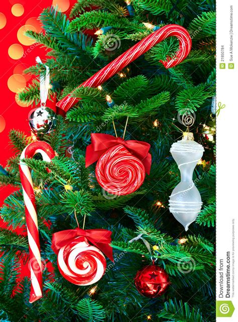 noble pine christmas tree  candy canes stock images image