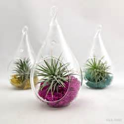 small water drop air plant terrarium choose your own moss color 15 00 via etsy for my