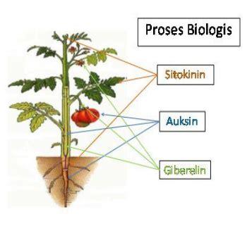 Hormon Zpt Alami bpp kecamatan gading mengenal berbagai macam zat pengatur
