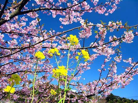 sfondi desktop gratis fiori primavera foto primavera per sfondi desktop settemuse it