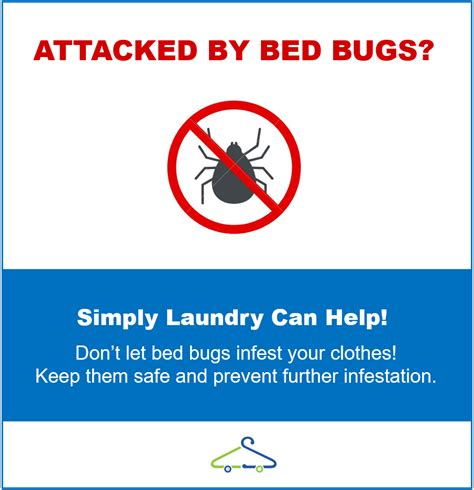 can you get bed bugs from laundromat how to clean your clothes after bed bugs