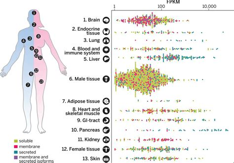 2 proteins in the human tissue based map of the human proteome science